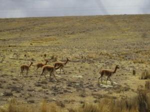 040 Nazca-Pampa Galenas 14-09-2015