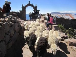 046 Puno-Lac Titicaca-île Taquile 27-09-2015